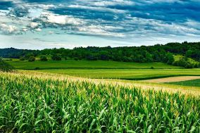 Patent network analysis in agriculture: a case study of the development and protection of biotechnologies